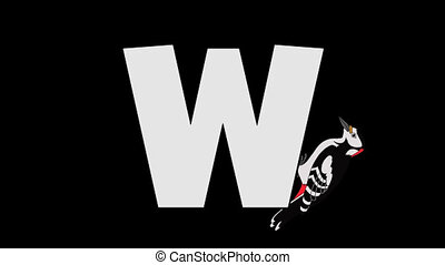 Letter W and Woodpecker (background) - Animated animal...