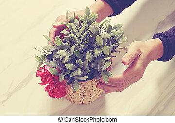 regalo, Dar, hombre, mano, tenencia, planta, florero, en,...