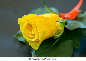 Yellow Roses For the groomsman in the wedding