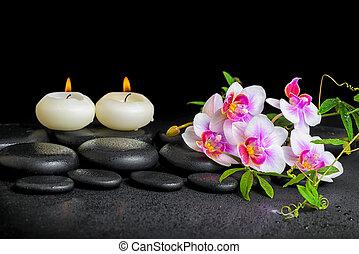 spa decoration of purple orchid phalaenopsis, twig...