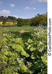 Cotswolds footpath - Spring time in the Cotswolds,...