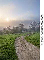 Cotswolds misty morning - A misty Cotswold spring morning,...
