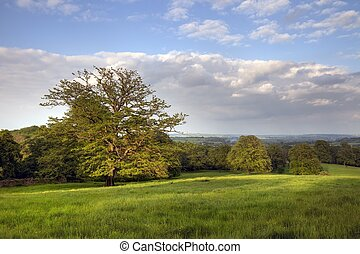 Rural Cotswolds, England - Open countryside with mature oaks...