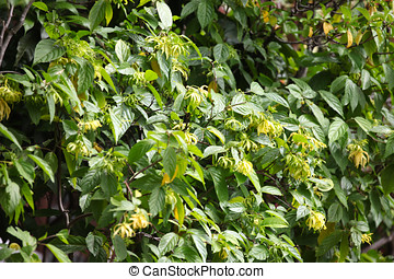 Leaves of plants of various shapes, Thailand, South East...