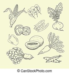 Collection of hand-drawn garden and field vegetables and...