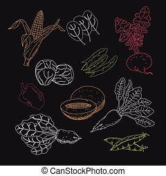 Set of garden and field vegetables and fruits. Herbs for...