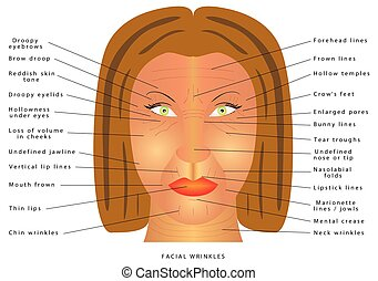 Ageing face changes. Facial Wrinkles. Folds and wrinkles on...