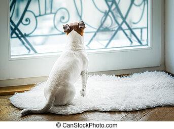 pensando, observar, cão, esperar