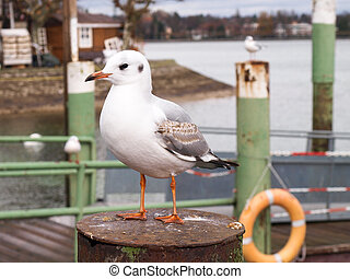 Seagull perched on the harbor mooring poles