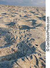 National Natural Park Tayrona in Colombia - Bird footprints...