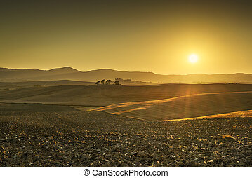 Tuscany Maremma sunset. Trees, hills and green fields in...