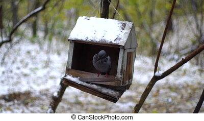 bird dove in a manger in the rain.