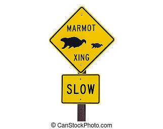 Marmot Crossing Roadsign Isolated on White - Marmot crossing...