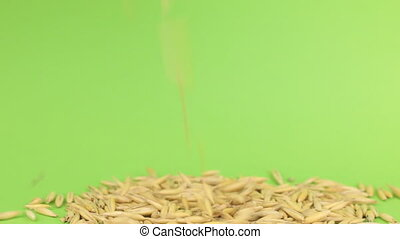 Falling grains oats on heap of oats on a green screen, shot...