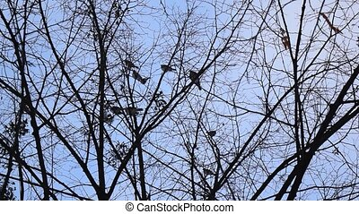 Birds fly from leafless tree - Flock of birds perched in...
