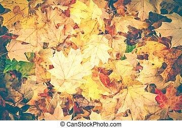 Colorful Fall Foliage Background - Colorful Fall Foliage...