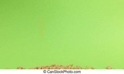 Falling grains wheat on heap of wheat on a green screen,...