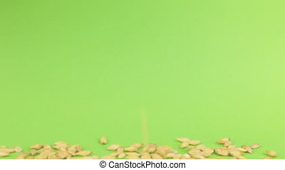 Falling grains barley on heap of barley on a green screen,...