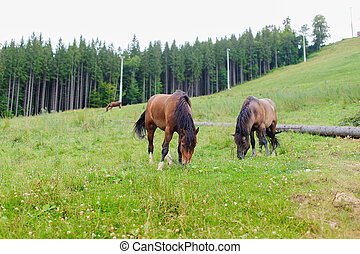Grazing Horses on the Hillside - Two horses grazing on a...