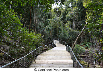 Empty path in the rainforest of Jamison Valley Blue...