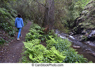 Woman walks on rainforest path along a water stream at the...