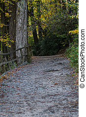 Wide Trail Uphill with Leaves turning yellow