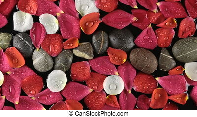 Beautiful rose petals and stones with dew drops blown by by...