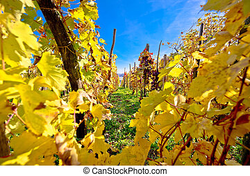 Vineyard in autumn colors view