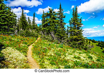 Hiking through the mountain alpine meadows with wild Flowers on Tod Mountain