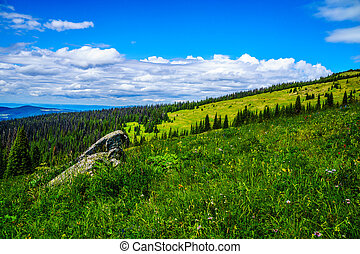 Pine Beetle affected forest in the Shuswap Highlands of...