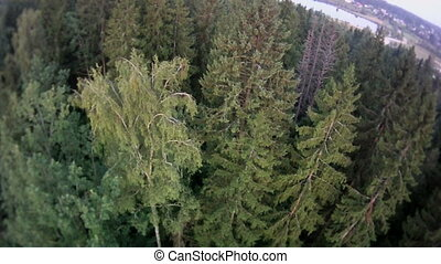 Forest landscape aerial view. - Deep forest from bird's eye