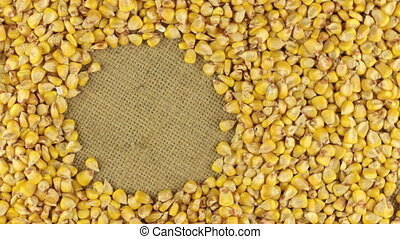 Rotation of the corn grains lying on sackcloth with space...