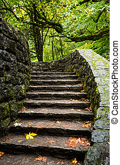 Stone steps leading into a forest trail