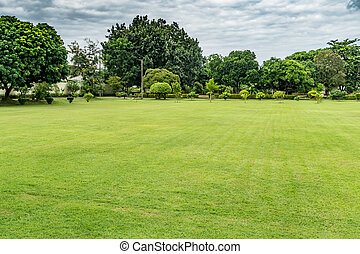 Green grass texture - Green lawn with trees and green...