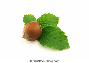 Hazelnut with leaf