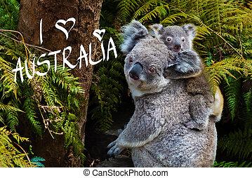 Australian koala bear native animal with baby and I Love...