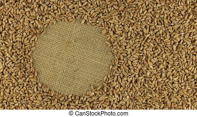 Rotation of the wheat grains lying on sackcloth with space...