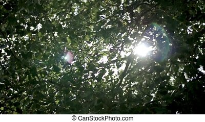 The Sun makes its way through the branches of a tree HD