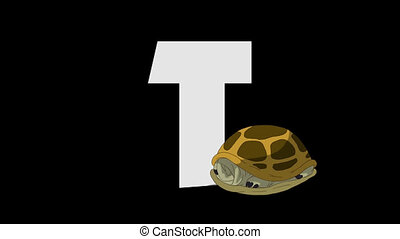Letter T and Turtle (foreground)