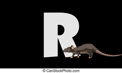 Letter R and Rat (foreground) - Animated animal alphabet....