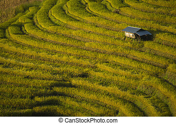 Beautiful landscape of Mae Cham rice field terraced on the...