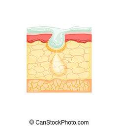 Dermatology Skincare Anatomical Info Illustration...