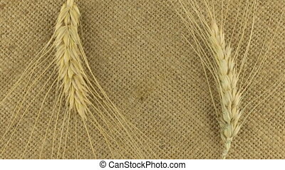 Rotation of the two wheat spikelets on sackcloth with space for your text