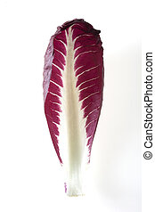 one leaf of chicory on white background