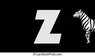 Letter Z and Zebra (foreground) - Animated animal alphabet....