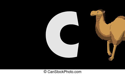 Letter C and Camel (foreground) - Animated animal alphabet....
