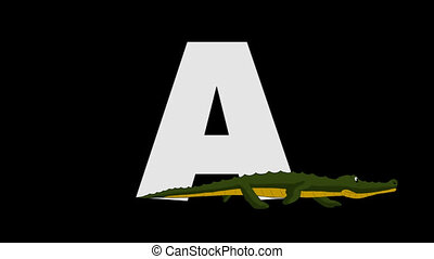Letter A and Alligator (foreground) - Animated animal...