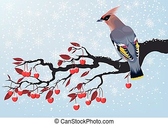 Bird on cherry branch - Vector illustration of waxwing on a...
