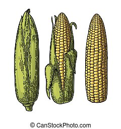 Set ripe cob of corn from the closed to the cleaned....