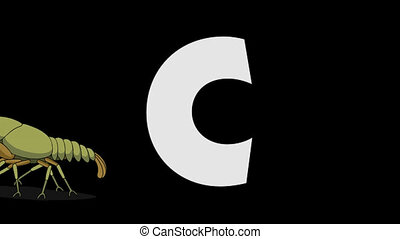 Letter C and Crayfish (foreground) - Animated animal...